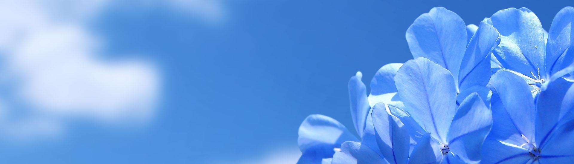 background_flower_01