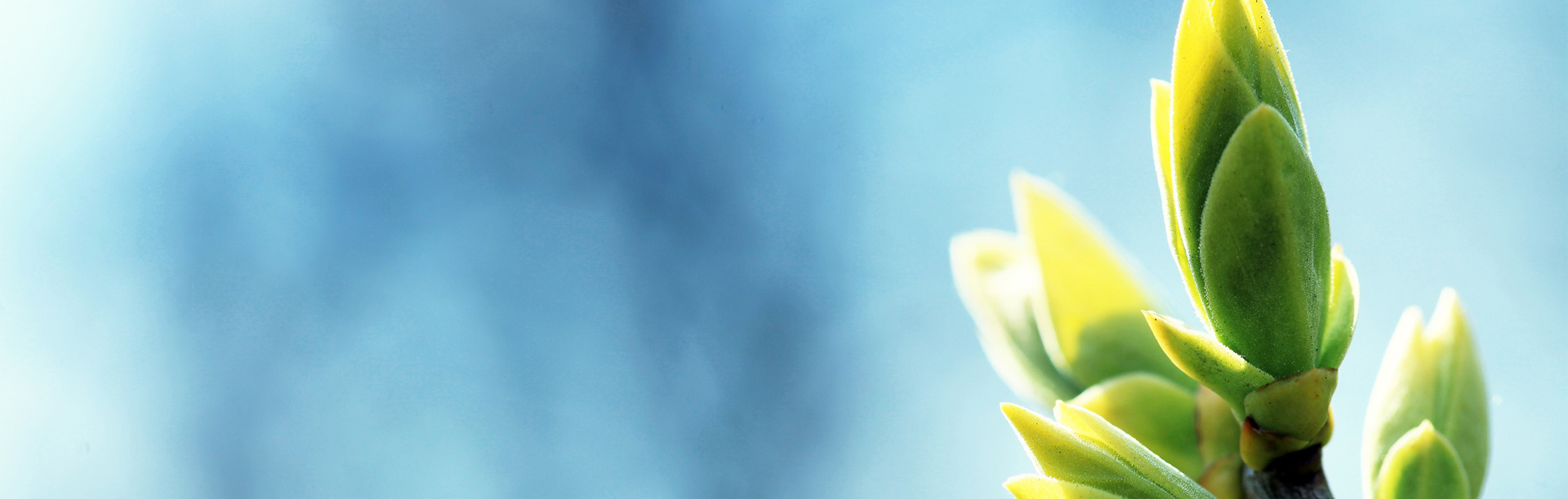 spring_green_background_04
